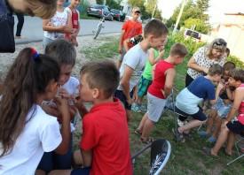 День семьи, любви и верности в Карцево