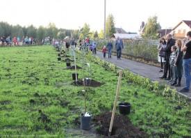 Проект Вишневый сад